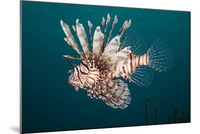 Lionfish-Michele Westmorland-Mounted Photographic Print
