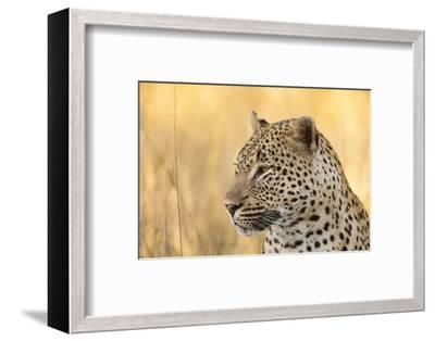 African Leopard-Michele Westmorland-Framed Photographic Print