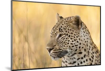 African Leopard-Michele Westmorland-Mounted Photographic Print