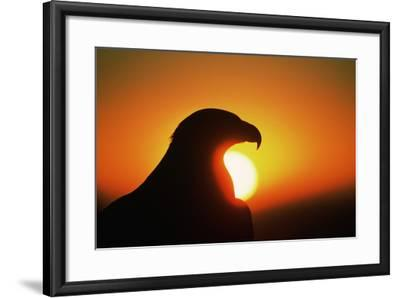 Golden Eagle at Sunrise-W^ Perry Conway-Framed Photographic Print