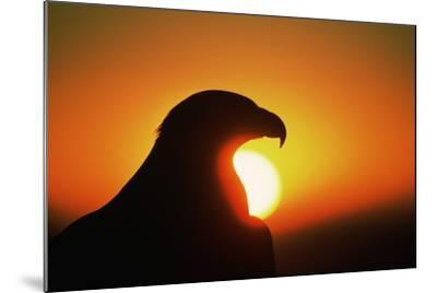 Golden Eagle at Sunrise-W^ Perry Conway-Mounted Photographic Print