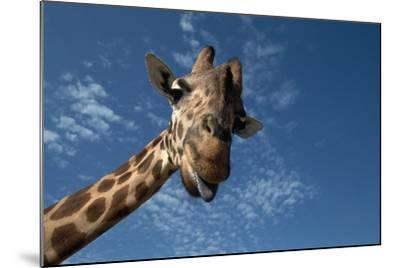 Giraffe-Rick Doyle-Mounted Photographic Print