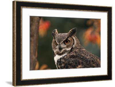 Great Horned Owl with Blurred Autumn Foliage-W^ Perry Conway-Framed Photographic Print