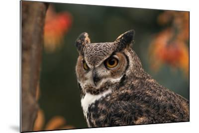 Great Horned Owl with Blurred Autumn Foliage-W^ Perry Conway-Mounted Photographic Print