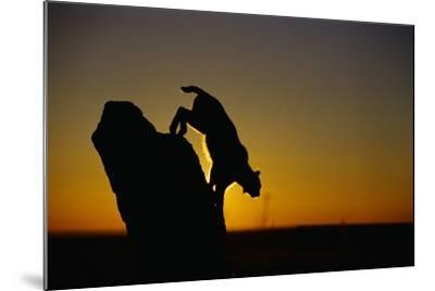 Bobcat Silhouette at Sunrise-W^ Perry Conway-Mounted Photographic Print