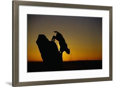 Bobcat Silhouette at Sunrise-W^ Perry Conway-Framed Photographic Print