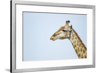 Giraffe, Moremi Game Reserve, Botswana-Paul Souders-Framed Photographic Print