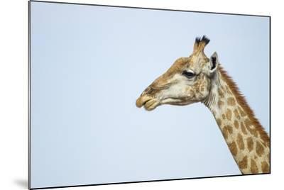 Giraffe, Moremi Game Reserve, Botswana-Paul Souders-Mounted Photographic Print