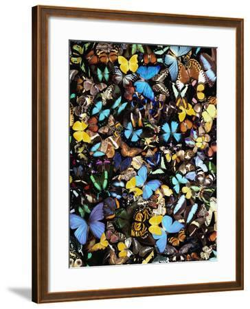 Butterflies-Darrell Gulin-Framed Photographic Print