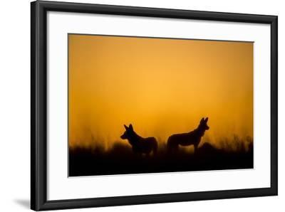 Wild Dogs, Moremi Game Reserve, Botswana-Paul Souders-Framed Photographic Print