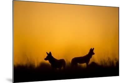 Wild Dogs, Moremi Game Reserve, Botswana-Paul Souders-Mounted Photographic Print