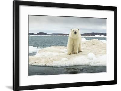 Polar Bear on Hudson Bay Pack Ice, Nunavut, Canada-Paul Souders-Framed Photographic Print