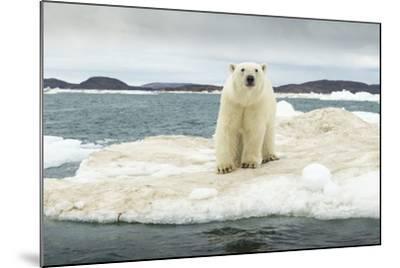 Polar Bear on Hudson Bay Pack Ice, Nunavut, Canada-Paul Souders-Mounted Photographic Print