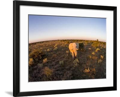 Aerial View of Elephant, Nxai Pan National Park, Botswana-Paul Souders-Framed Photographic Print