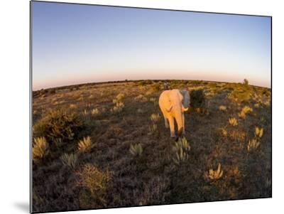 Aerial View of Elephant, Nxai Pan National Park, Botswana-Paul Souders-Mounted Photographic Print