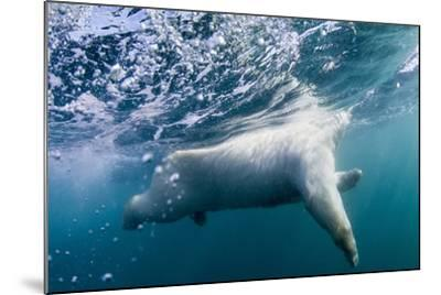 Underwater Polar Bear by Harbour Islands, Nunavut, Canada-Paul Souders-Mounted Photographic Print
