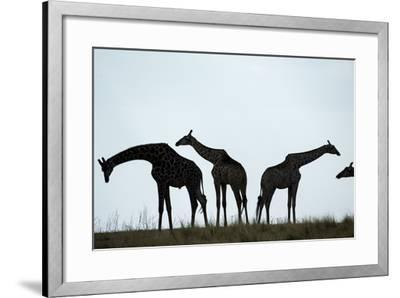 Giraffe Herd, Chobe National Park, Botswana-Paul Souders-Framed Photographic Print