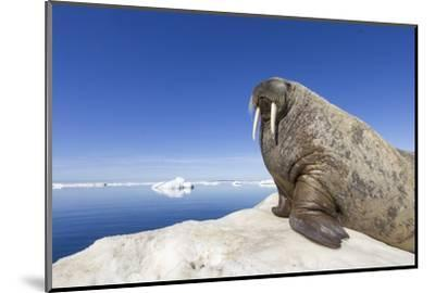 Walrus on Iceberg, Hudson Bay, Nunavut, Canada-Paul Souders-Mounted Photographic Print
