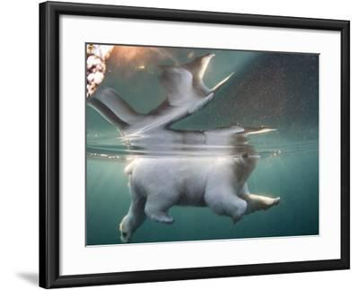 Underwater Polar Bear, Hudson Bay, Nunavut, Canada-Paul Souders-Framed Photographic Print
