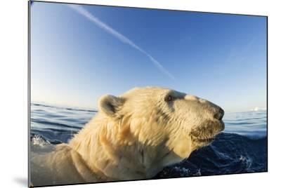 Swimming Polar Bear, Hudson Bay, Nunavut, Canada-Paul Souders-Mounted Photographic Print