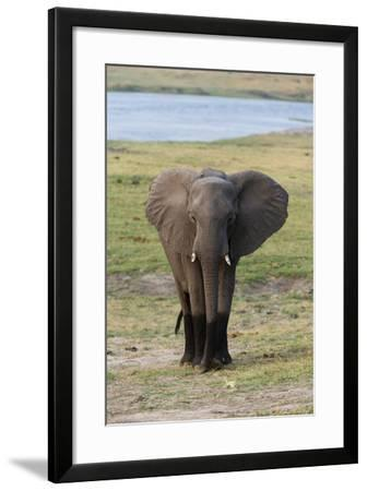 Young African Elephant-Sergio Pitamitz-Framed Photographic Print