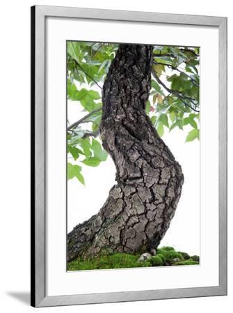 Bonsai-Fabio Petroni-Framed Photographic Print