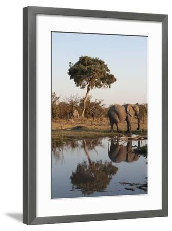 African Elephant-Sergio Pitamitz-Framed Photographic Print