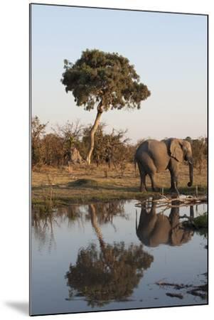 African Elephant-Sergio Pitamitz-Mounted Photographic Print