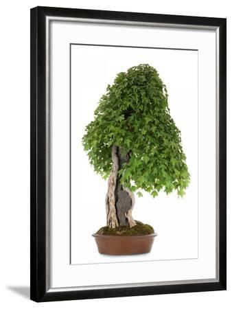 Bonsai-Fabio Petroni-Framed Photographic Print
