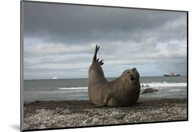 Southern Elephant Seal-Joe McDonald-Mounted Photographic Print