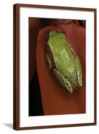 Heterixalus Betsileo (Betsileo Reed Frog)-Paul Starosta-Framed Photographic Print