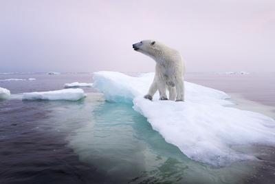 Polar Bear, Hudson Bay, Canada-Paul Souders-Framed Photographic Print