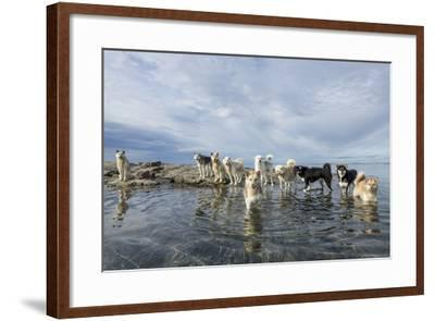 Sled Dogs, Nunavut, Canada-Paul Souders-Framed Photographic Print
