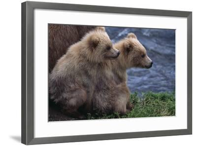 Grizzly Cubs with Mother by River-DLILLC-Framed Photographic Print