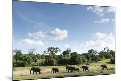 African Elephant Herd, Chobe National Park, Botswana-Paul Souders-Mounted Photographic Print