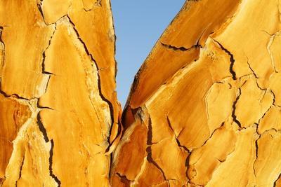 Quiver Tree Bark-Richard Du Toit-Framed Photographic Print