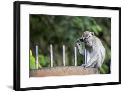 Long-Tailed Macaque at Batu Caves, Kuala Lumpur, Malaysia-Paul Souders-Framed Photographic Print