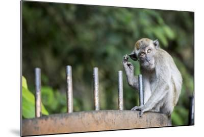 Long-Tailed Macaque at Batu Caves, Kuala Lumpur, Malaysia-Paul Souders-Mounted Photographic Print