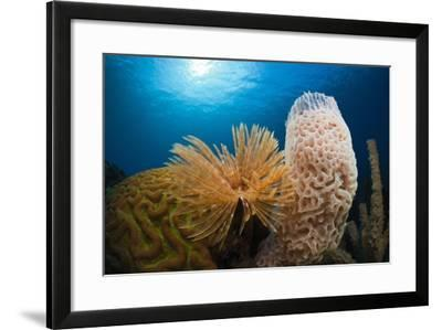 Fan Worm (Spirographis Spallanzanii), Tube Sponge, and Brain Coral on a Coral Reef-Reinhard Dirscherl-Framed Photographic Print