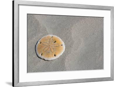 Sand Dollar-DLILLC-Framed Photographic Print