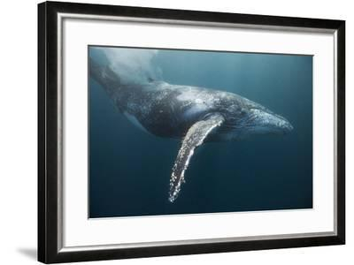 Humpback Whale (Megaptera Novaeangliae)-Reinhard Dirscherl-Framed Photographic Print