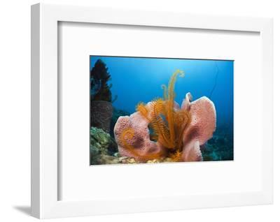 Sponge and Crinoid on a Coral Reef-Reinhard Dirscherl-Framed Photographic Print