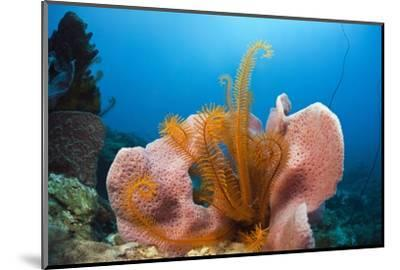 Sponge and Crinoid on a Coral Reef-Reinhard Dirscherl-Mounted Photographic Print