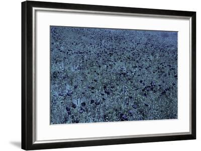 Color Vision of the Bee-Paul Starosta-Framed Photographic Print