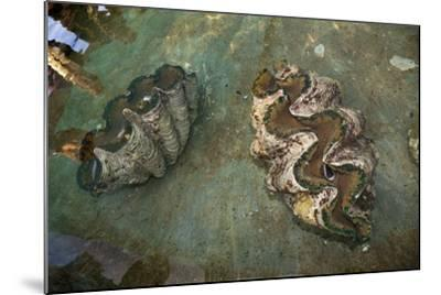 Giant Clam Farm-Reinhard Dirscherl-Mounted Photographic Print