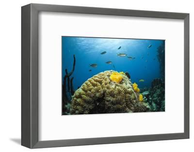 Caribbean Coral Reef-Reinhard Dirscherl-Framed Photographic Print