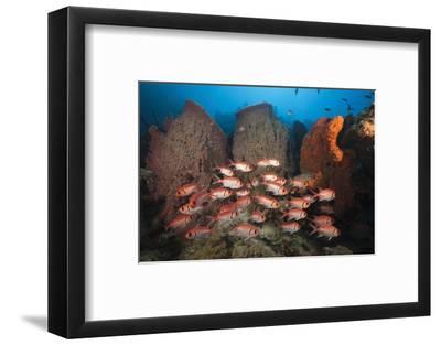 Soldierfish on Coral Reef-Reinhard Dirscherl-Framed Photographic Print