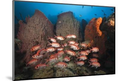 Soldierfish on Coral Reef-Reinhard Dirscherl-Mounted Photographic Print