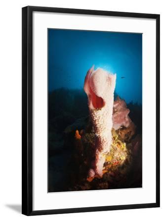 Tube Sponge on a Coral Reef-Reinhard Dirscherl-Framed Photographic Print
