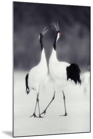 Red-Crowned Cranes in Courtship Display-DLILLC-Mounted Photographic Print